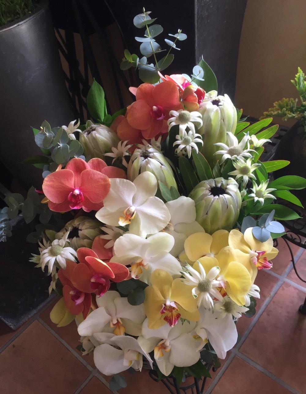 色とりどりの胡蝶蘭が美しいご就任お祝い花