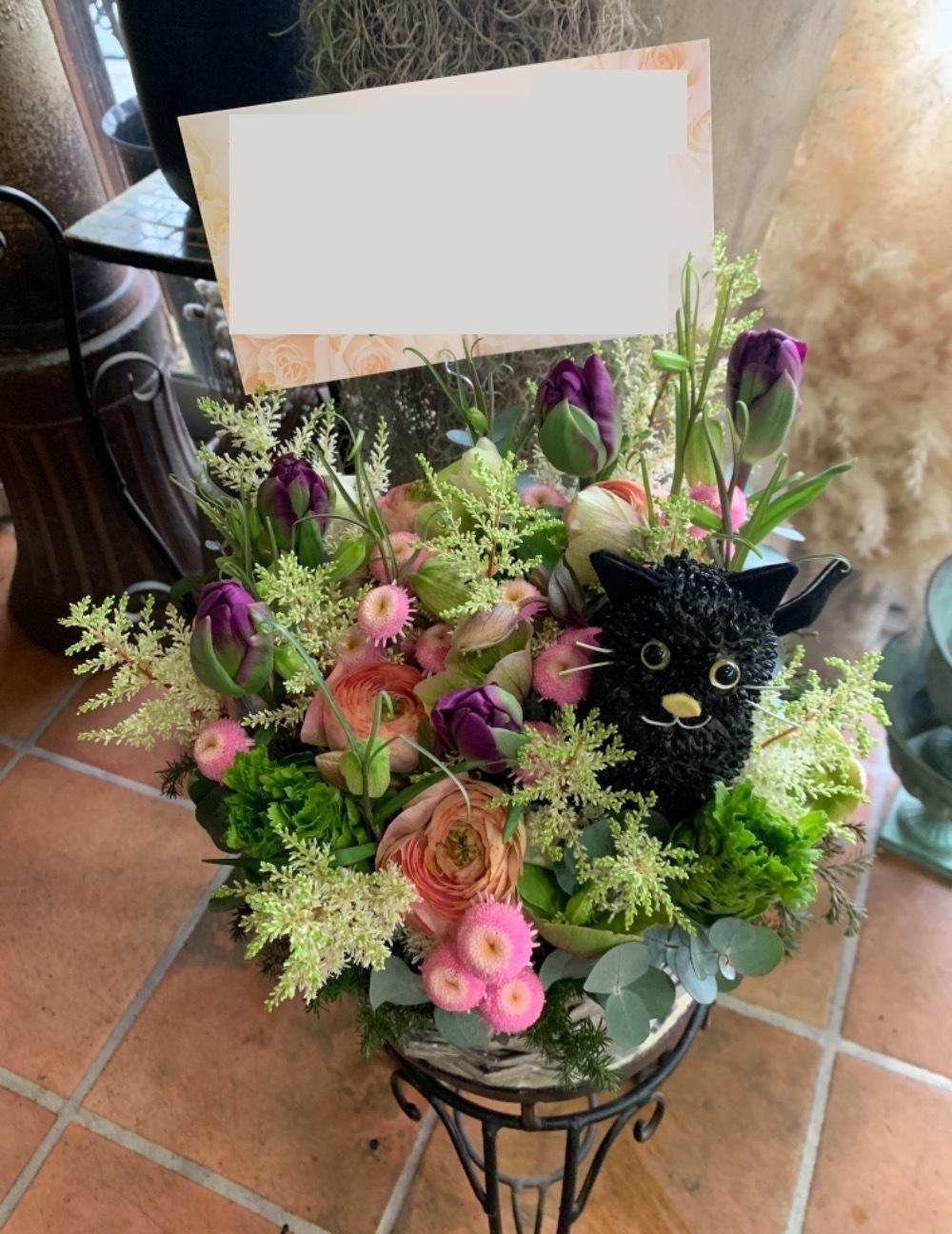 看板猫が可愛い周年祝い花
