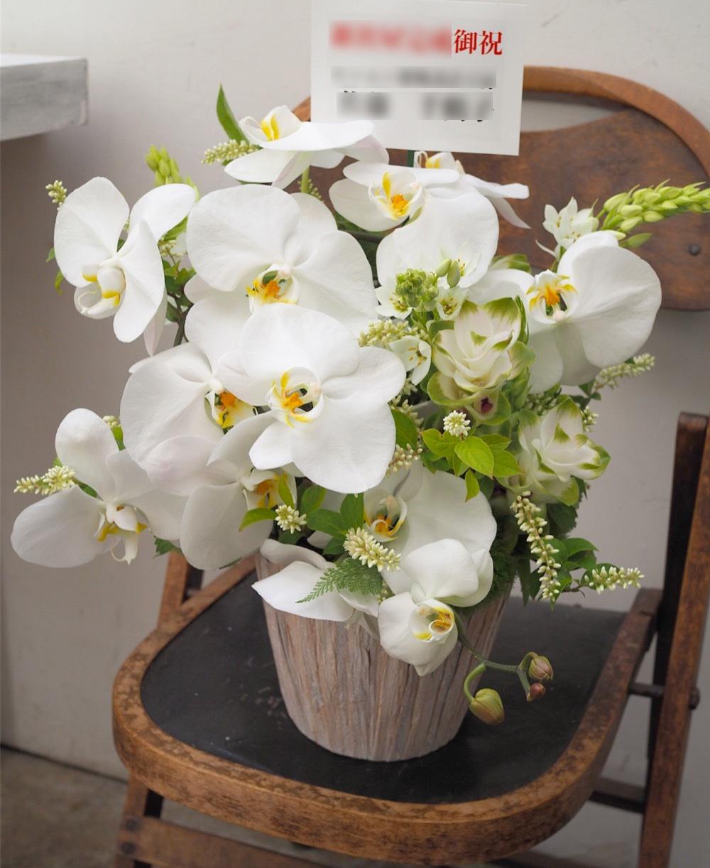 胡蝶蘭とクルクマがメインの上品で爽やかな祝い花