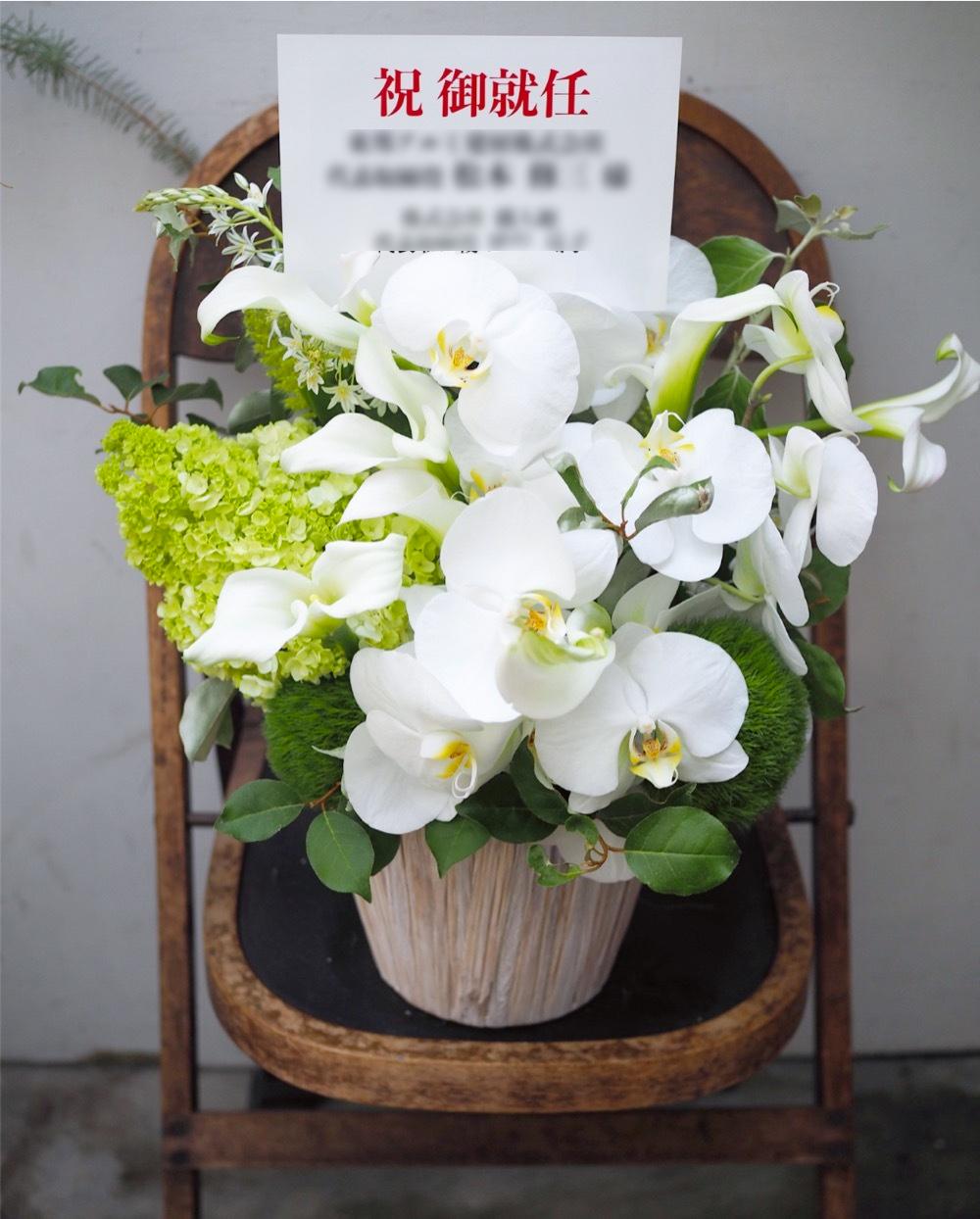 上品な胡蝶蘭に季節のアジサイを添えて 建材会社さま社長就任祝い花
