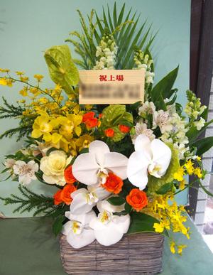 胡蝶蘭をメインに、派手すぎず華やかな上場祝い花
