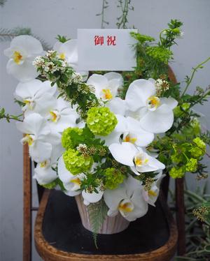 胡蝶蘭を贅沢に使った上品でナチュラルなお祝い花