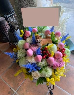 動物病院の開院祝いにも わんちゃんと桃が印象的なご出演祝い花・楽屋花