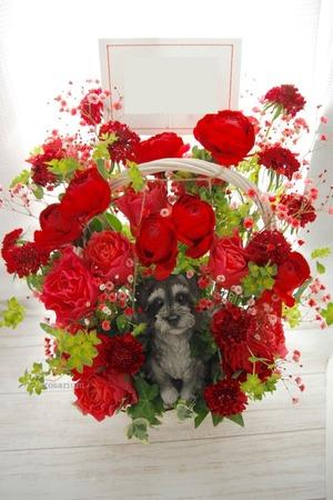 「感謝と応援の想いを沢山込めて」イラストレーター様個展祝い花