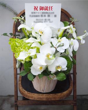 1位:上品な胡蝶蘭にアジサイを添えて 建材会社さま社長就任祝い花