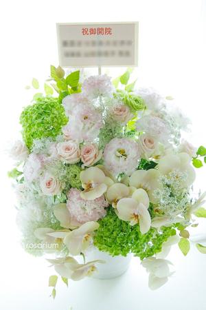 優しい色味の胡蝶蘭、クリニック様ご開院お祝いアレンジメント