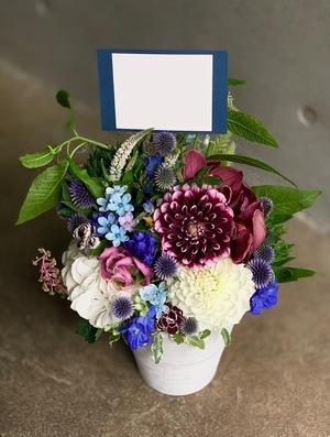 ブルースターを用いた開店祝い花