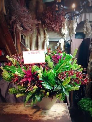 「開業先のお店の空間を邪魔せず、お祝いの気持ちを伝えたい」落ち着いた雰囲気の開院祝い花