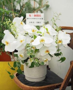 ゴージャスな雰囲気の白の開店お祝い花